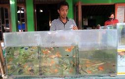 Freshwater fish Royalty Free Stock Photo