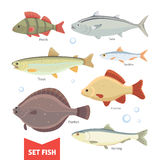 Freshwater fishes collection isolated on white background. Set Fish vector illustration. Stock Photo