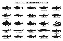 Freshwater fishes silhouettes. Vector set. Collection of  icons on a white background Stock Image