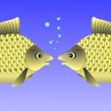 Freshwater Fishes Stock Photo