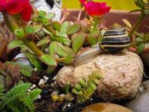 Freshwater garden snail slug slowly crawls on the rock Stock Image