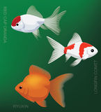 Freshwater Gold Fish Set Cartoon Vector Illustration Stock Photo