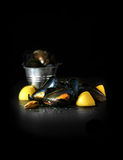 Freshwater Mussels Stock Images