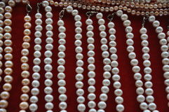 Freshwater pearls on red velvet Stock Photos