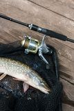 Freshwater pike and fishing equipment lies on black fishing net. Royalty Free Stock Photos