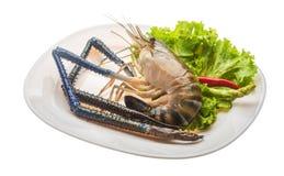 Freshwater prawn Royalty Free Stock Image