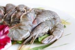 Freshwater shrimp. Hot pot dishes--freshwater shrimp Stock Photography