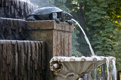 Freshwater Turtle Fountain Stock Images