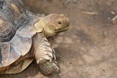 Freshwater turtle. Stock Photos