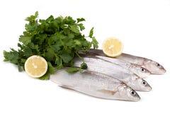 Freshwater Whitefish Stock Photo