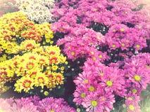Freshy Garten des bunten Blumenhintergrundes Stockbild