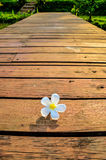 Freshy Morning. A photo of a white flower on the wooden walkway Stock Image