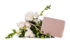 Fresia e una carta in bianco Immagine Stock