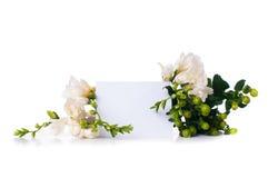 Fresia e una carta in bianco Fotografia Stock