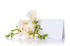 Fresia e una carta in bianco Immagini Stock