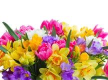 Fresia en gele narcisbloemengrens stock afbeelding