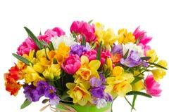 Fresia y flores del narciso Imagen de archivo libre de regalías