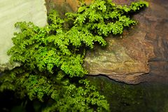 The Fresify mini tree on a stone wall royalty free stock photo