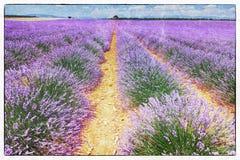 Freskomålningstil av lavendelfältet Arkivfoton