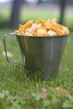 Fresly ha selezionato i funghi Fotografie Stock Libere da Diritti
