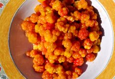 Fresly picked cloudberries Stock Photos