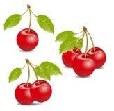 Fress cherrys Royalty-vrije Stock Afbeelding