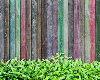 Frest grass and multicolor wood. Fresh grass and multicolor wood background Royalty Free Stock Photo