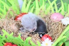 Fretbaby in het nest van hooi Royalty-vrije Stock Afbeeldingen