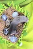Fretbaby in het nest van hooi Royalty-vrije Stock Fotografie