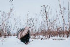 Fretka w śniegu Zdjęcie Stock
