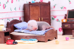 Fretki dziecko w lala domu Zdjęcie Royalty Free