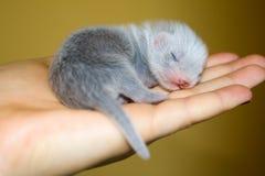 Frettchenschätzchen Stockfotos