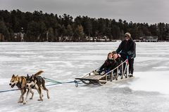 Freudiger Hundeschlitten gelaufen in den Adirondacks Lizenzfreie Stockfotos