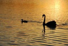 Freunde auf goldenem Teich Lizenzfreie Stockfotografie