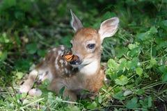 Freunde im Wald Lizenzfreies Stockfoto