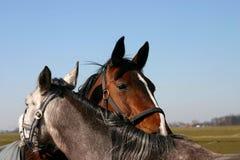Freunde - Pferde lizenzfreie stockfotografie