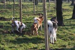 Freundliche Hundefirma im Wald Stockfoto