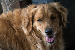 Freundlicher Hund Stockfoto