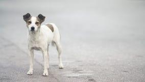 Freundlicher kleiner streunender Hund auf der Straße Lizenzfreie Stockfotos