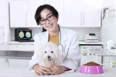 Freundlicher Tierarzt mit maltesischem Hund Lizenzfreie Stockfotografie