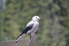 Freundlicher Vogel Lizenzfreies Stockfoto