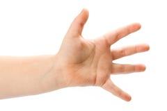 Freundlicherer Arm - Palme Stockfotografie