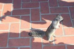 Freundliches Eichhörnchen Lizenzfreies Stockfoto