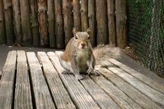 Freundliches Eichhörnchen, das auf einer Bank sitzt Stockbilder