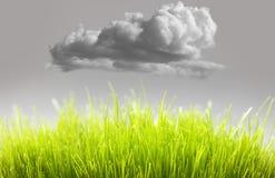 Freundliches frisches Gras Eco Stockfotografie