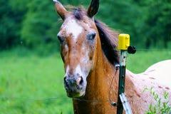 Freundliches Pferd am Zaun, der Kamera betrachtet stockfotografie