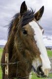 Freundliches pferdeartiges Lizenzfreie Stockfotos