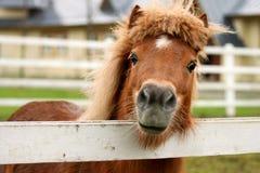 Freundliches Pony Lizenzfreie Stockfotos