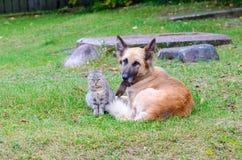 Freundschaft der obdachlosen Katze und des Hundes stockfoto
