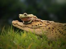 Freundschaft des Frosches und der Krokodile stockfotos
